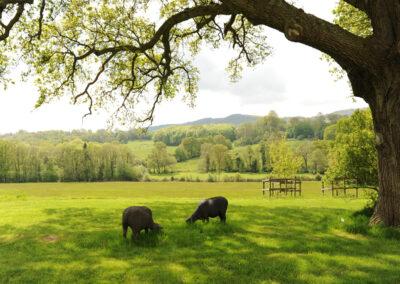 shepherd-hut-at-bignor-floral-fringe-fair-19